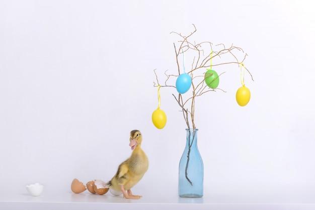 Piccolo anatroccolo e coperture delle uova e decorazione di pasqua Foto Premium