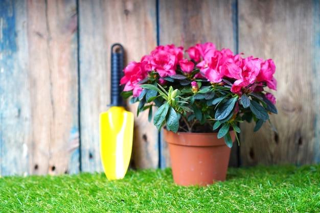 Piccola pala da giardino e fiore di azalea fiore sull'erba verde. invasatura di fiori e lavori di giardini primaverili. Foto Premium