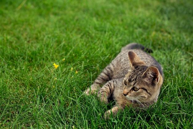 Il piccolo gattino si trova nell'erba Foto Premium