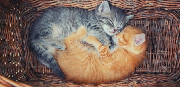 I piccoli gattini sono grigi e rossi. Foto Premium