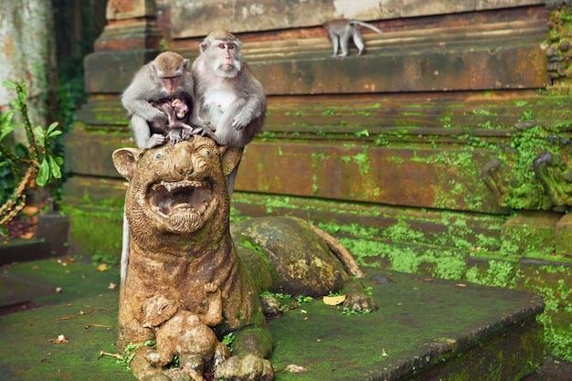 Famiglia di scimmie macaco con bambino piccolo seduto sulla scultura del leone vicino al tempio nella foresta del santuario sull'isola tropicale di bali. viaggi in asia. sfondo della fauna selvatica indonesiana e balinese e tema degli animali. Foto Premium