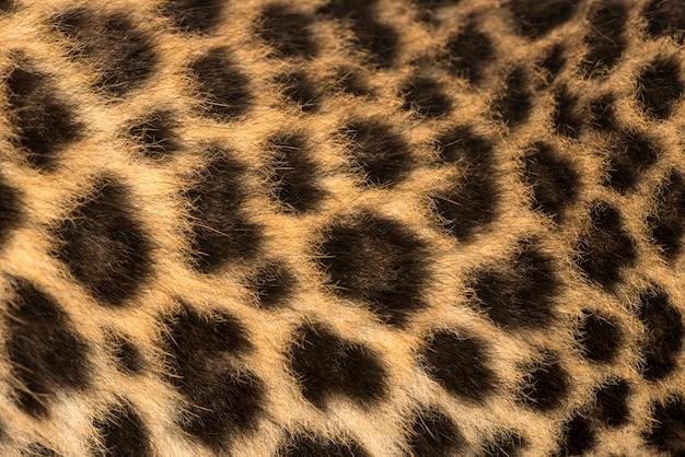 Macro della pelliccia di un cucciolo di leopardo macchiato panthera pardus Foto Premium