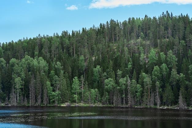 Maestosa foresta e pittoresco fiume ambiente scenico settentrionale della carelia Foto Premium