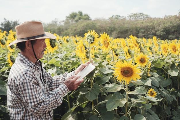 Agricoltore asiatico maschio che utilizza compressa digitale nell'azienda agricola del girasole Foto Premium