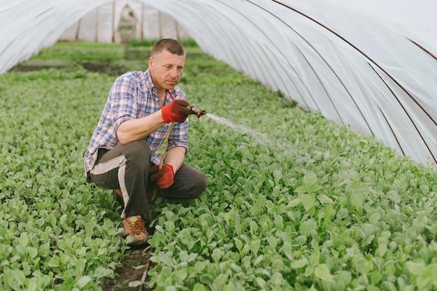 L'uomo si prende cura delle piante in serra Foto Premium