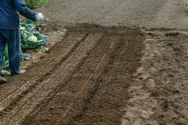 L'uomo semina la segale nel giardino del giardino Foto Premium