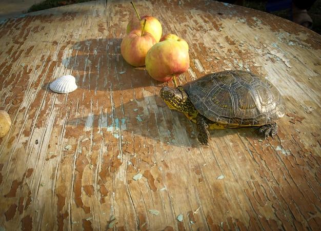 Tartaruga di palude e giovani mele Foto Premium