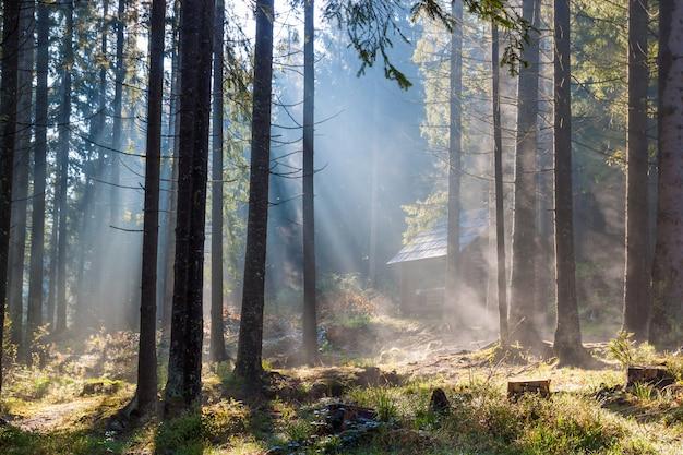 Nebbiosa mattina di sole nella foresta. Foto Premium