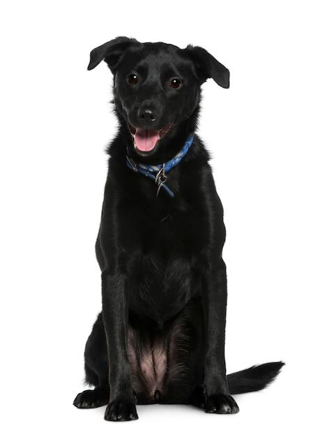 Cane di razza mista, 2 anni, seduto di fronte al muro bianco Foto Premium