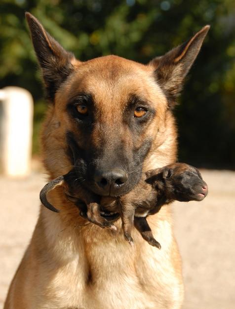 Cane e cucciolo di madre Foto Premium