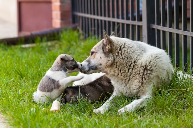 Cane madre con cuccioli di bambino, un cucciolo carino, un cane, cane - concentrarsi sulla parte anteriore - sfondo sfocato. Foto Premium