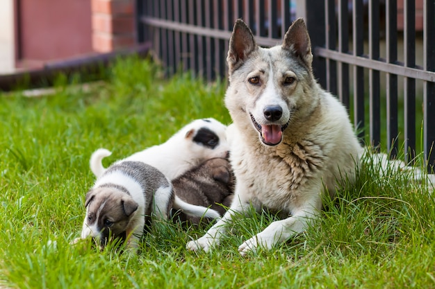 Cane madre con cuccioli di bambino, un cucciolo carino, un cane, cane - concentrarsi sulla parte anteriore. Foto Premium