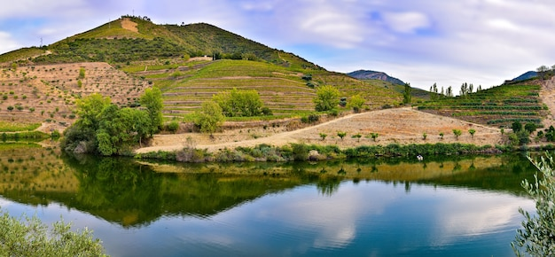 Panorama di montagna dei vigneti riflessa nel fiume Foto Premium
