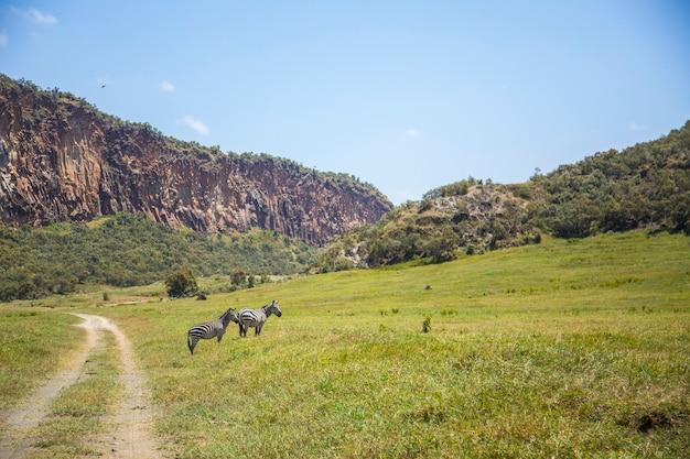Naivasha hells gate national park pieno di animali. kenya walking o bike safari Foto Premium