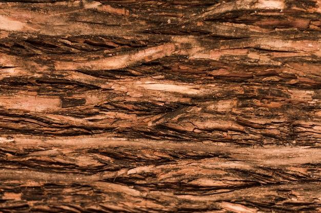 Struttura orizzontale naturale dell'albero forestale Foto Premium