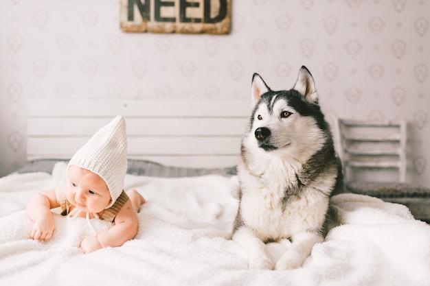 Ritratto di stile di vita del neonato che si trova sopra insieme al cucciolo del husky sul letto a casa. piccolo bambino e adorabile amicizia cane husky. bambino divertente infantile adorabile in cappuccio che riposa con l'animale domestico. Foto Premium