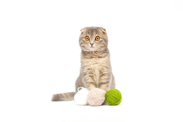 Bel gattino tabby scottish fold che gioca con palline di lana rosse Foto Premium