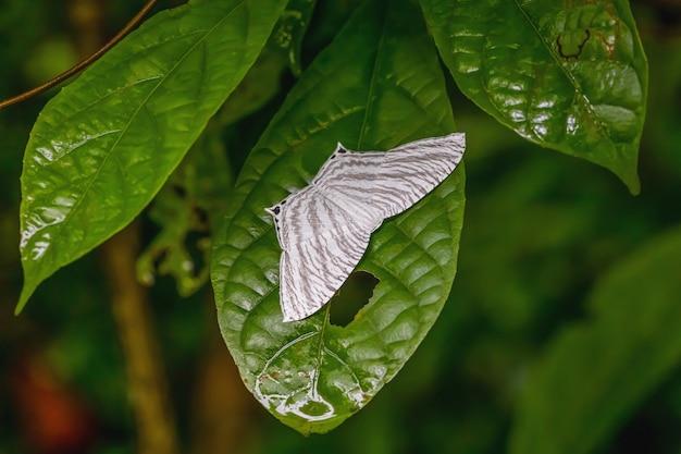 Farfalla notturna Foto Premium