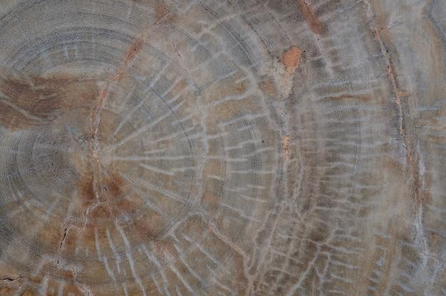 Vecchia struttura di legno naturale del tronco di albero tagliato per il fondo della parete e della tavola Foto Premium