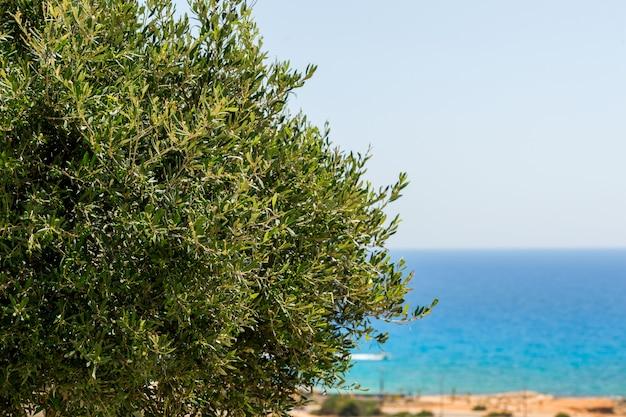 Olivo sulla spiaggia Foto Premium