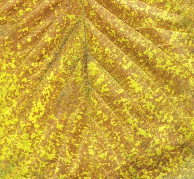 Macro arancione foglia d'autunno Foto Premium