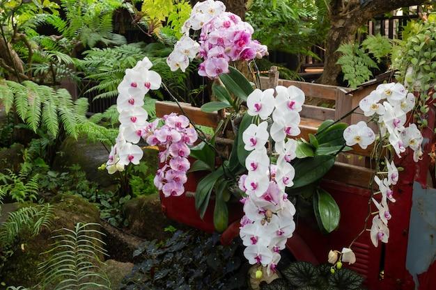 Pianta ornamentale in giardino Foto Premium