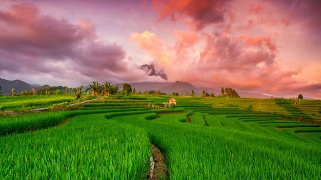 Viste panoramiche delle risaie con bel cielo sopra le montagne nel nord di bengkulu Foto Premium