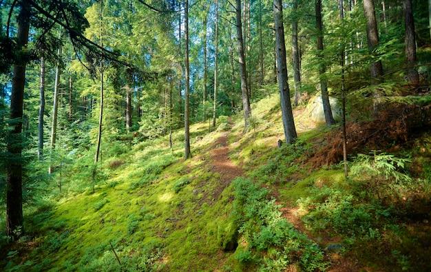 Un sentiero nella foresta che porta su una montagna tra gli alberi Foto Premium