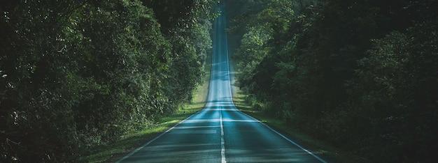 Modo del percorso attraverso il concetto di modo naturale della foresta autunnale Foto Premium