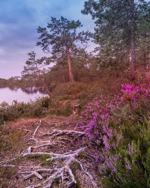 Sentiero con radici e fiori lungo un lago nella foresta in una sera d'estate. Foto Premium