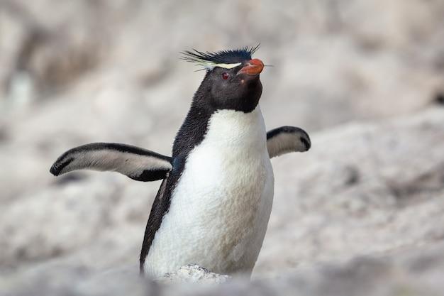 Pinguino seduto sulla spiaggia rocciosa Foto Premium