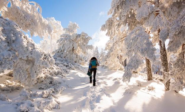 Persona che fa un'escursione nella foresta nevosa nella sierra de guadarrama national park, spagna Foto Premium