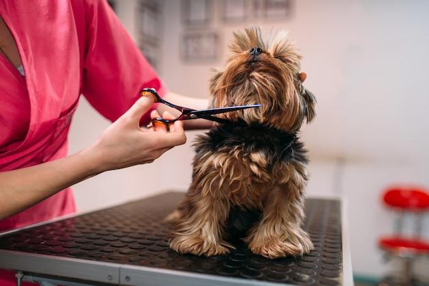 Toelettatore per animali domestici rende cane da toeletta, acconciatura per animali domestici sposo professionale e servizio di pulizia Foto Premium