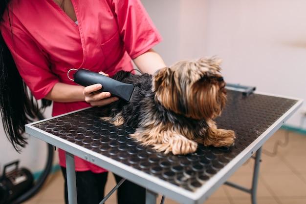 Toelettatura per animali domestici con macchina per tagliare i capelli, acconciatura per cagnolino servizio professionale di toelettatura e pulizia per animali domestici Foto Premium