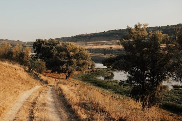 Pittoresco paesaggio di campagna con grandi alberi ramificati e strada campestre. strada di campagna. Foto Premium