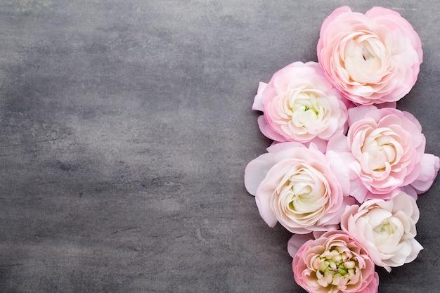 Bellissimo ranuncolo rosa su sfondo grigio Foto Premium