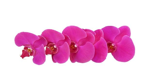Fiori di orchidea rosa isolati su sfondo bianco con tracciato di ritaglio. Foto Premium