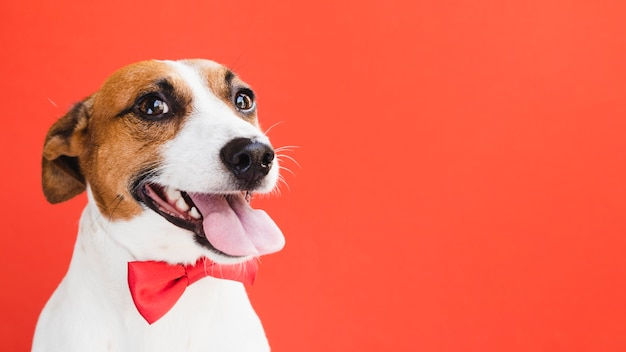 Cane carino giocoso con fiocco rosso copia-spazio Foto Premium