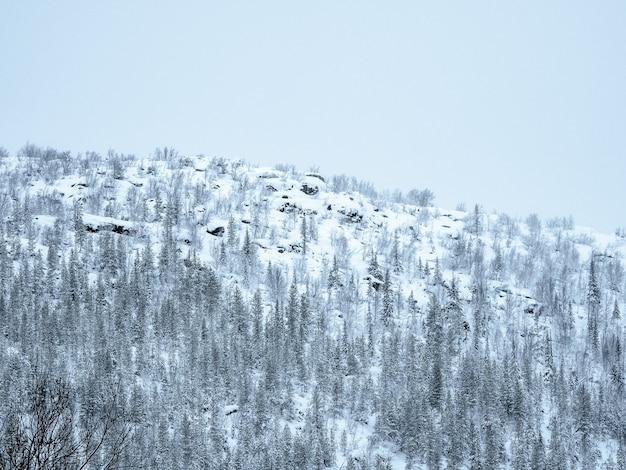 Collina polare. passo della neve. inverno artico colline boscose di neve Foto Premium