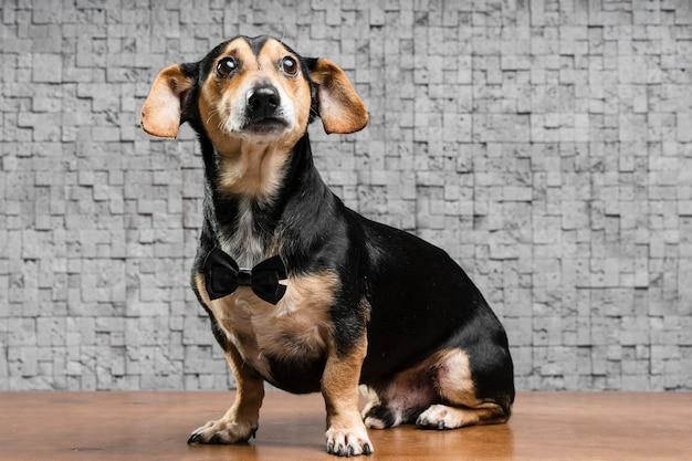 Ritratto di simpatico cagnolino con farfallino Foto Premium