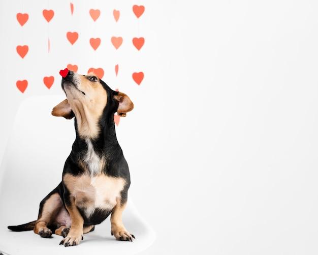 Ritratto di cagnolino carino con spazio di copia Foto Premium