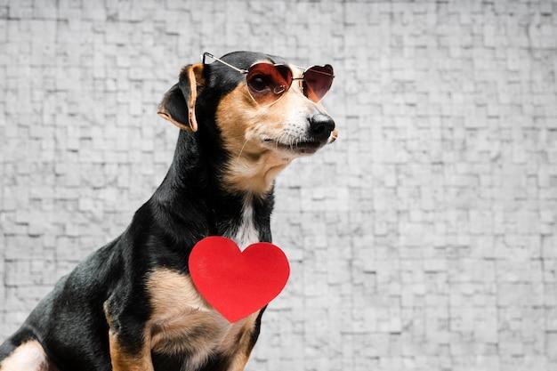 Ritratto di simpatico cagnolino con occhiali da sole Foto Premium