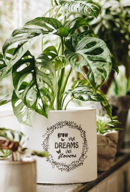 Piante verdi in vaso sulla finestra. concetto di arredamento e giardinaggio. Foto Premium