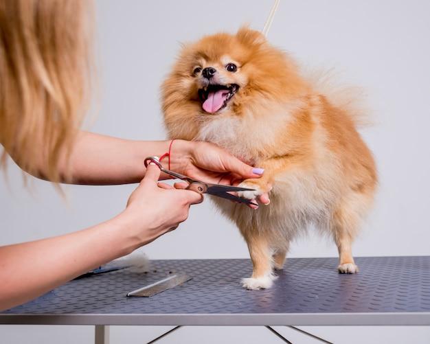 Cura professionale di un cane in un salone specializzato Foto Premium