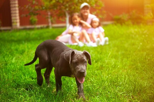 Cucciolo di cane e famiglia defocused con i bambini in estate nel giardino verde Foto Premium