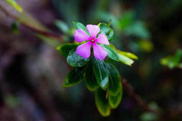 Fiore viola nella giungla Foto Premium