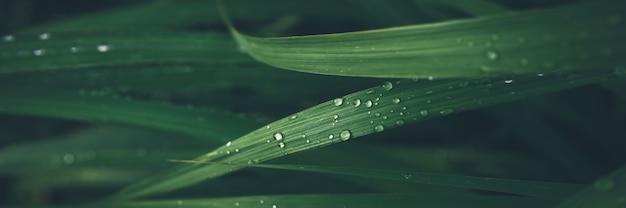 Goccia di pioggia sul fondo dell'insegna di struttura della foglia dell'erba verde. Foto Premium