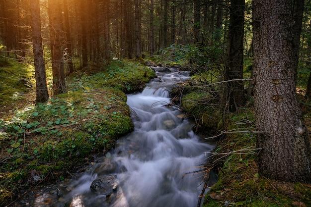 Rapido flusso d'acqua tra le rive, ricoperto di erba verde e muschio Foto Premium