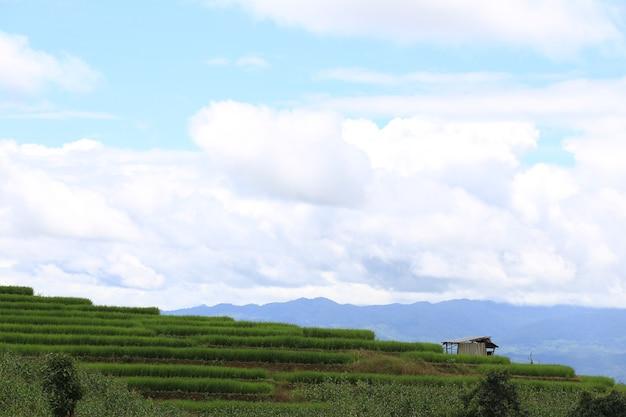 Terrazze di riso in thailandia ban pa bong biang, mae chaem, chiang mai, verde fresco Foto Premium