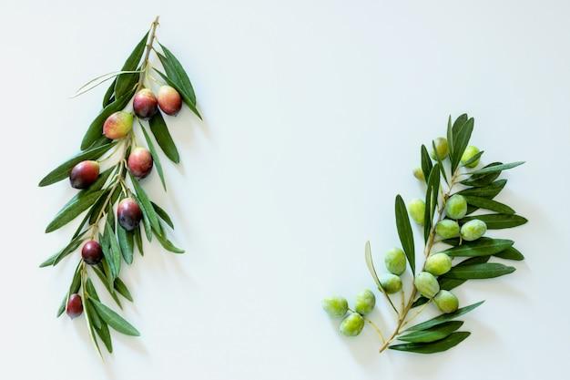 Olive scure e colorate colorate mature su un ramo. copia spazio. Foto Premium